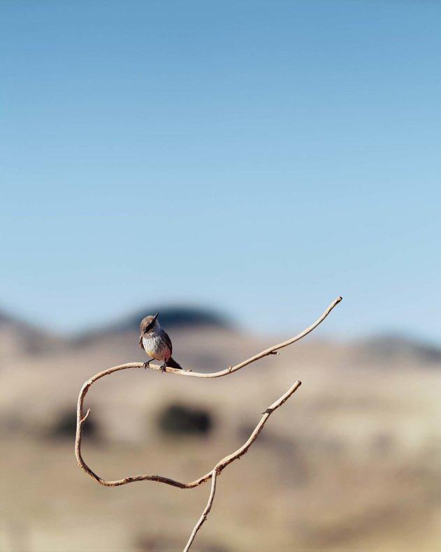 Man to Bird - Jean-Luc Mylayne - Phases Magazine
