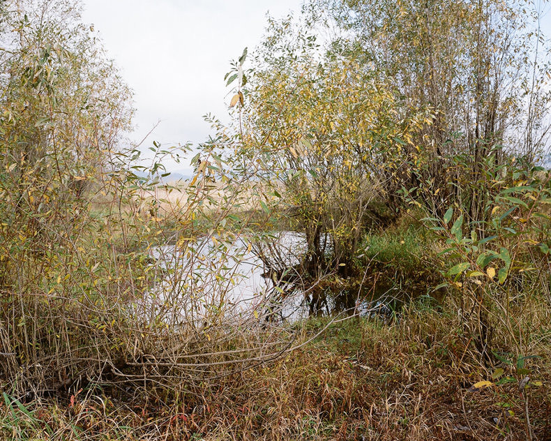 Sandy River Landscapes - Allie Mount - Phases Magazine