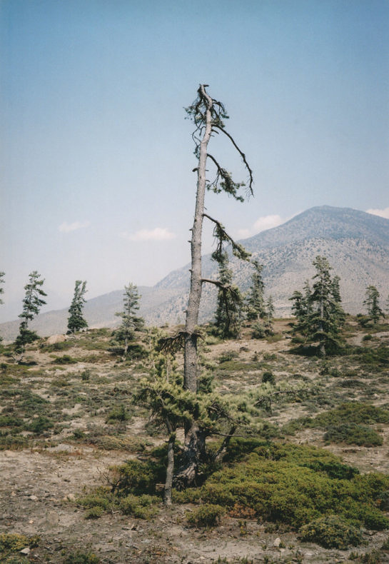 Some Windy Trees - Vincent Delbrouck - Phases Magazine