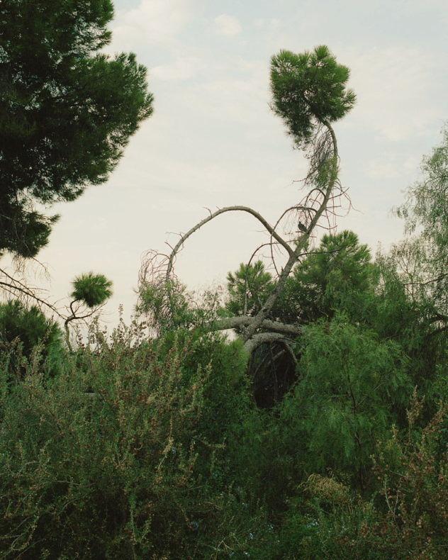 The Green Curtain - Salva López - Phases Magazine