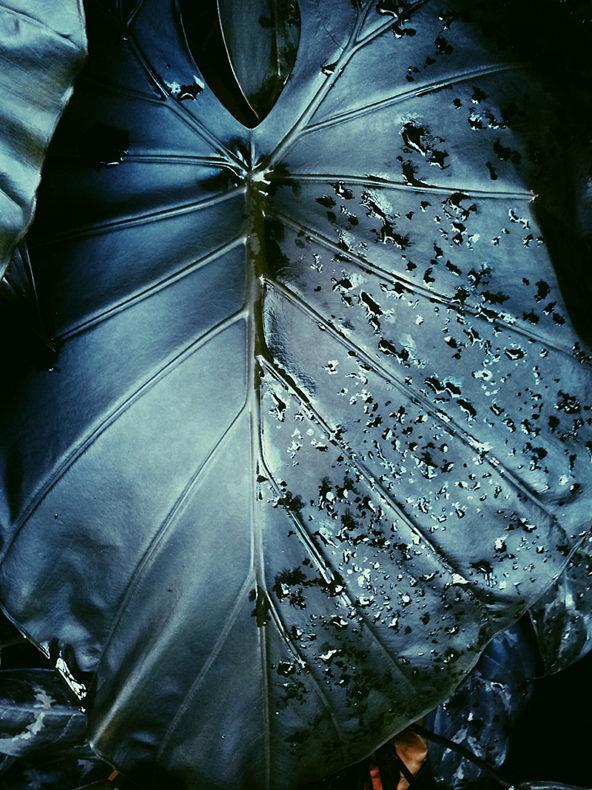 Leafy Dreams - Alishia Farnan - Phases Magazine