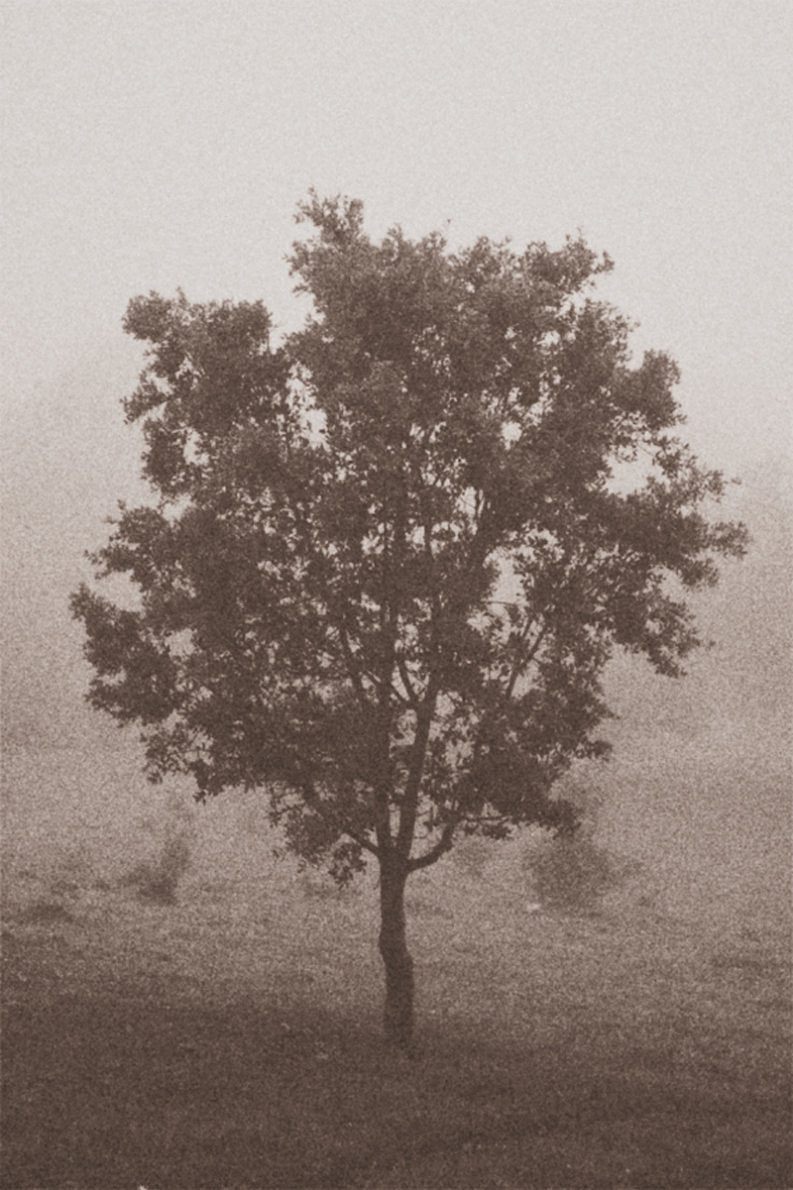 12 Coffee Trees - Gonzalo Bénard - Phases Magazine