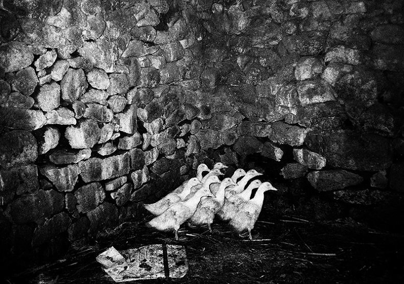Under The Surveillance Of Ancient Animals - Maria Oliveira - Phases Magazine