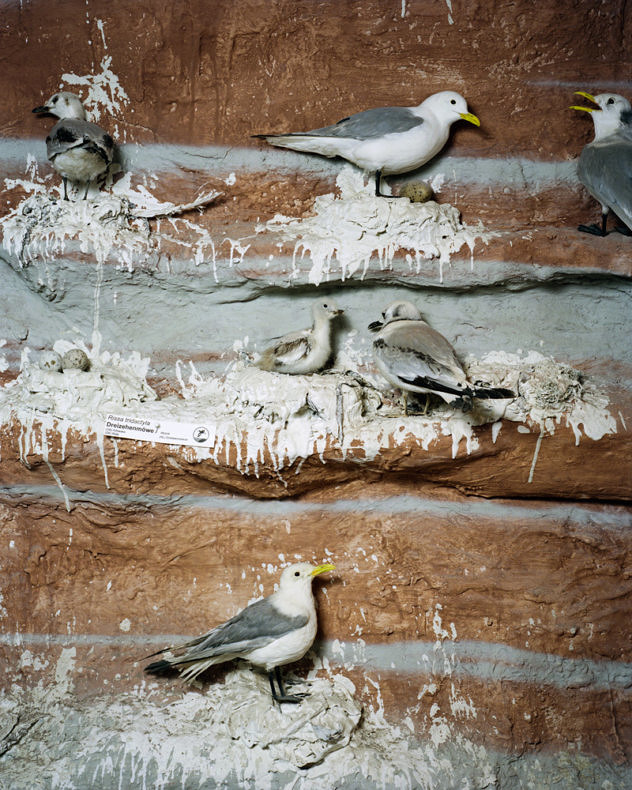 Where have all the songbirds gone? - Maarten Boswijk - Phases Magazine