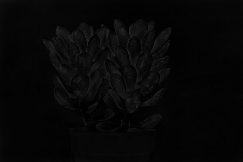 Nocturnes - Adriana Bogdanova - Phases Magazine