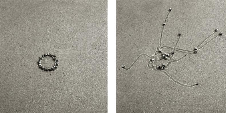 Snail Drawings Series - Daniel Ranalli - Phases Magazine