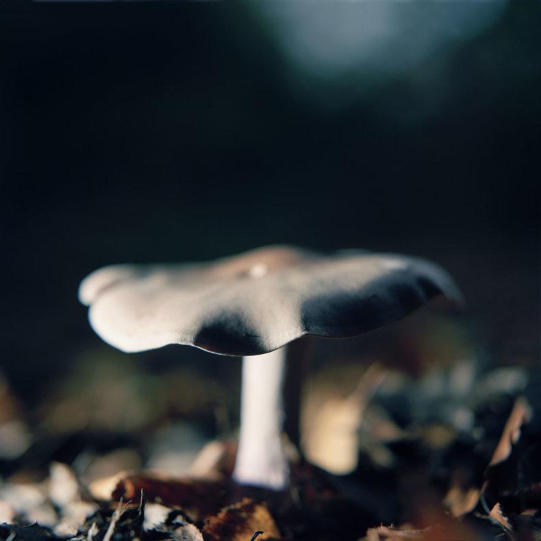 Mushrooms - Roy Mehta - Phases Magazine