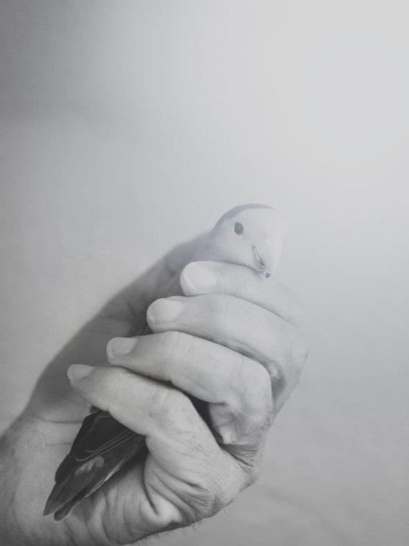 El nido vacio - Diambra Mariani - Phases Magazine