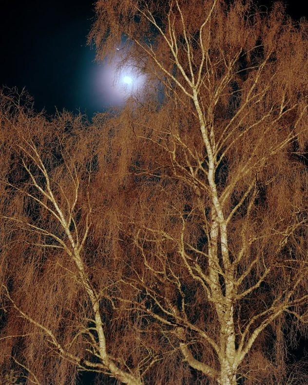 Above the Pines - Joseph Reddy - Phases Magazine