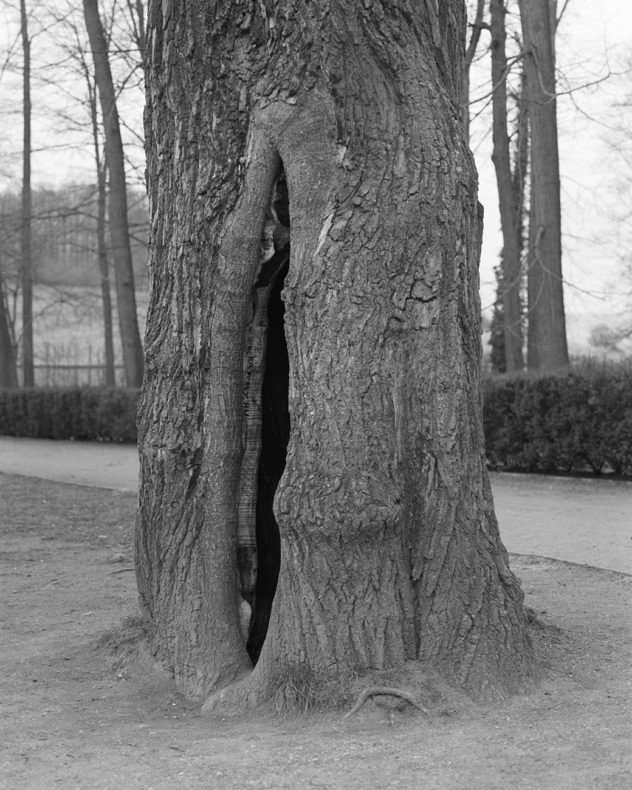 From the trees we run between - Anne Erhard - Phases Magazine