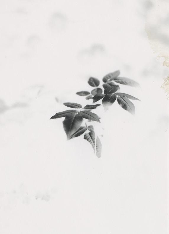 Efflorescent Cherry - Matt Slater - Phases Magazine