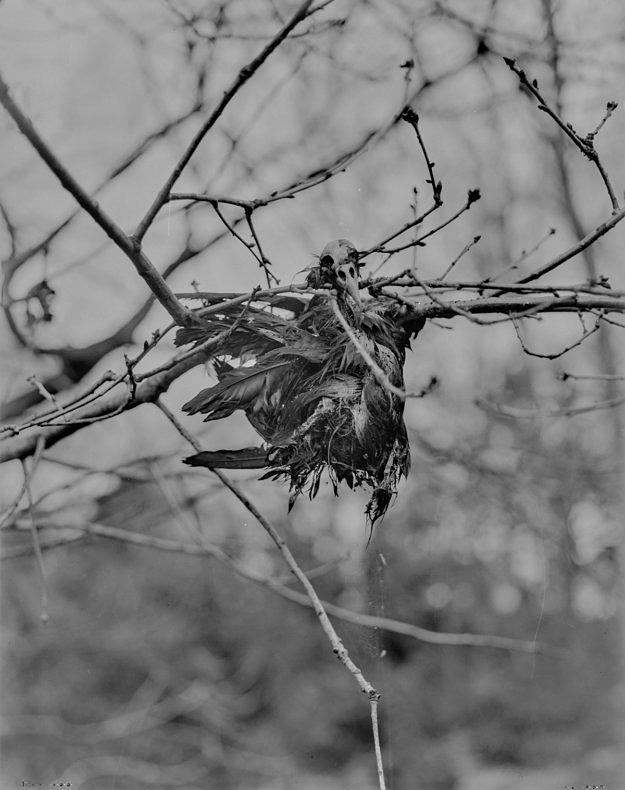 Autumn/Winter Passing - Callum Beaney - Phases Magazine