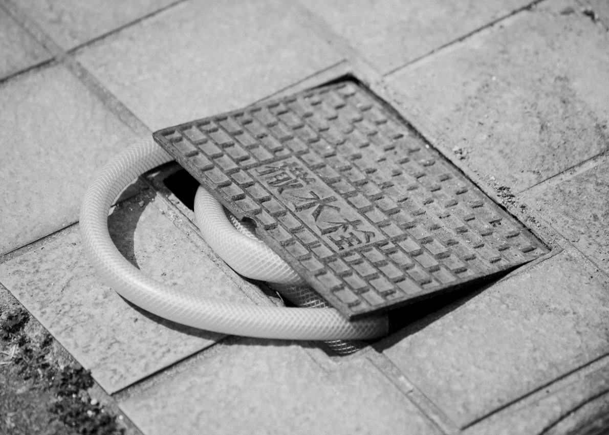 Snake Legs - Max Zerrahn - Phases Magazine