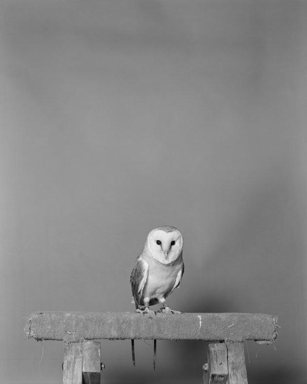 Parliament of Owls -  Jack Latham - Phases Magazine