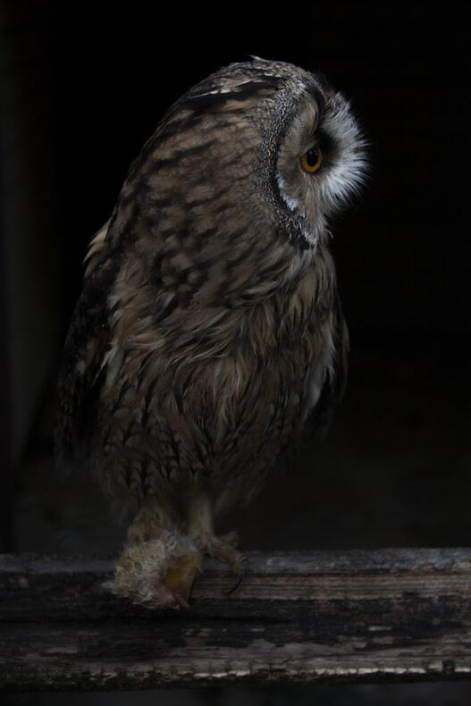 OWL - Matteo Cremonesi - Phases Magazine