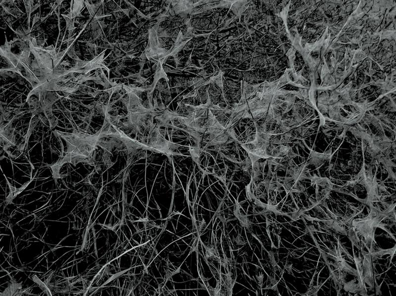 Post Mortem - Michael Koch - Phases Magazine