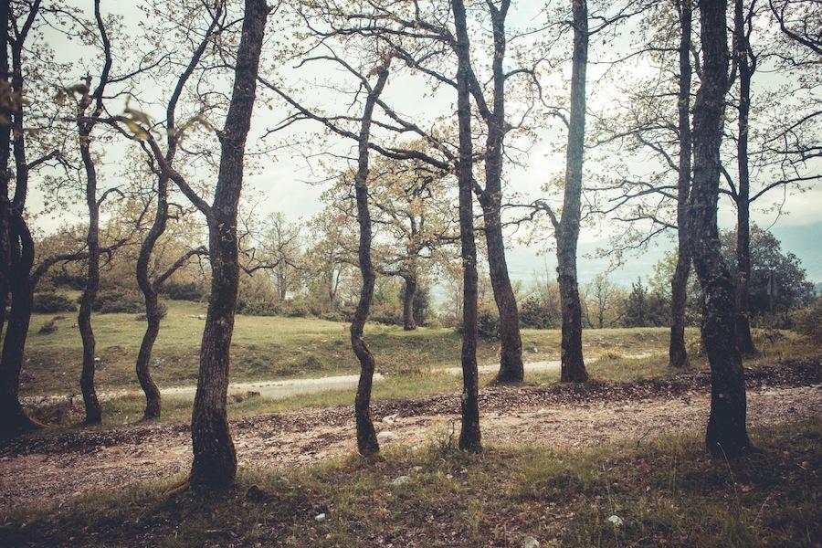 Foreste - Andrea Roversi - Phases Magazine