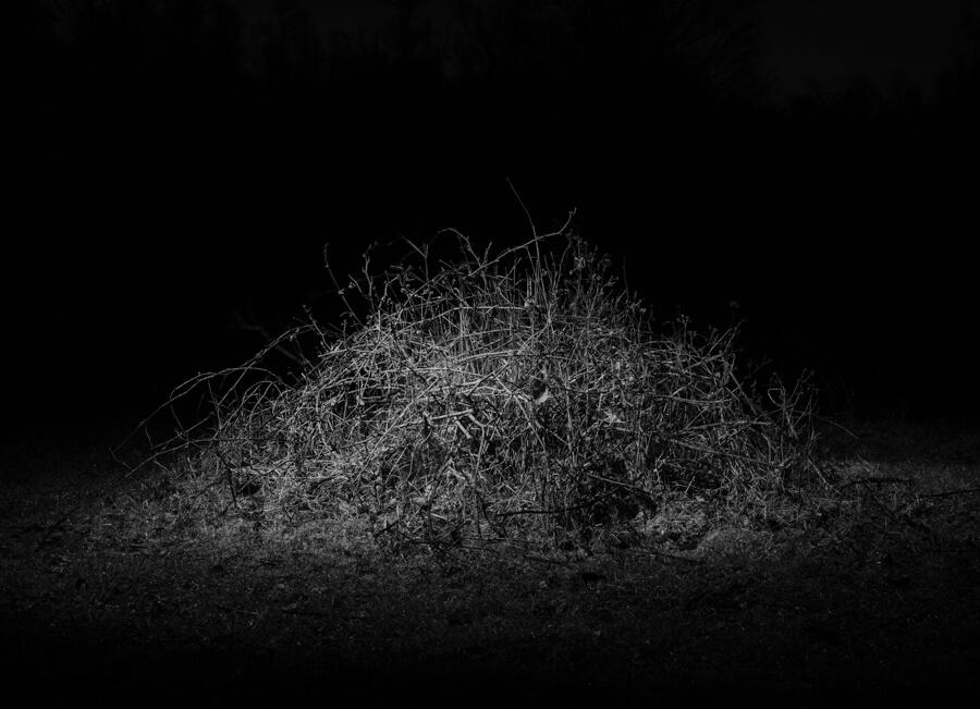 The Nights of the Plants - Aleksei Kazantsev - Phases Magazine