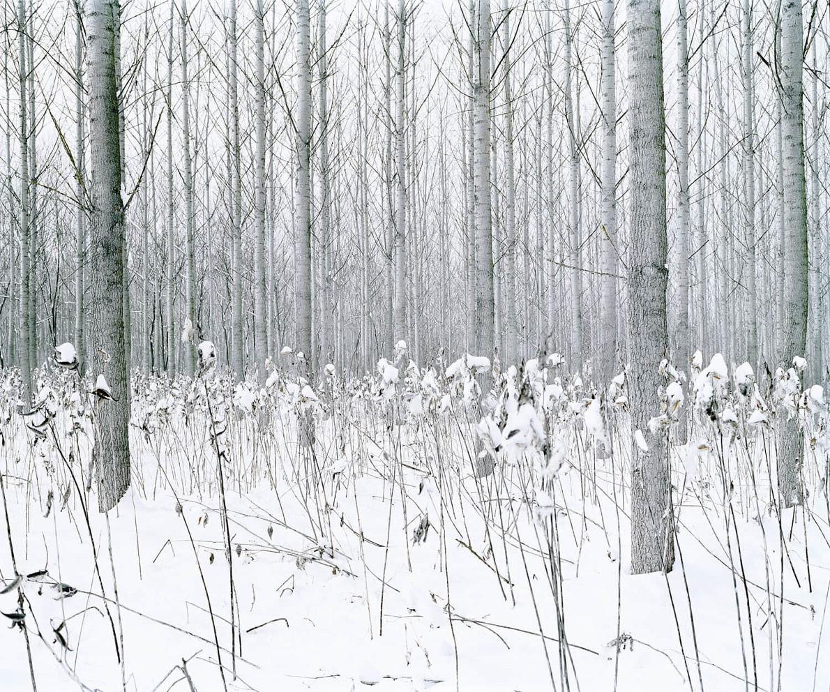 Green Silence - Daniel Kovalovszky - Phases Magazine