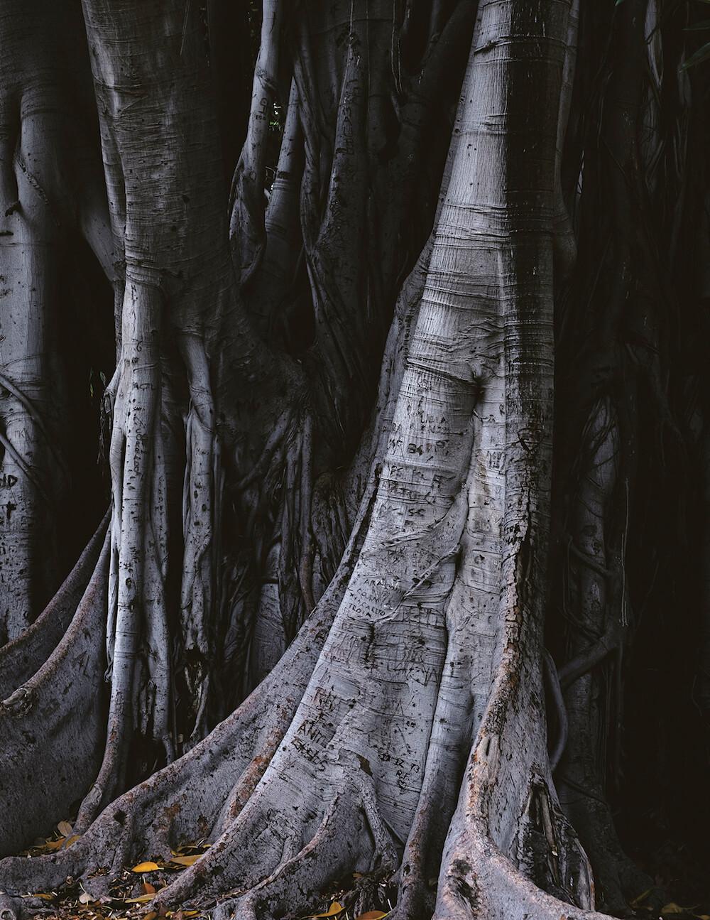 Demeure - Amaury da Cunha - Phases Magazine