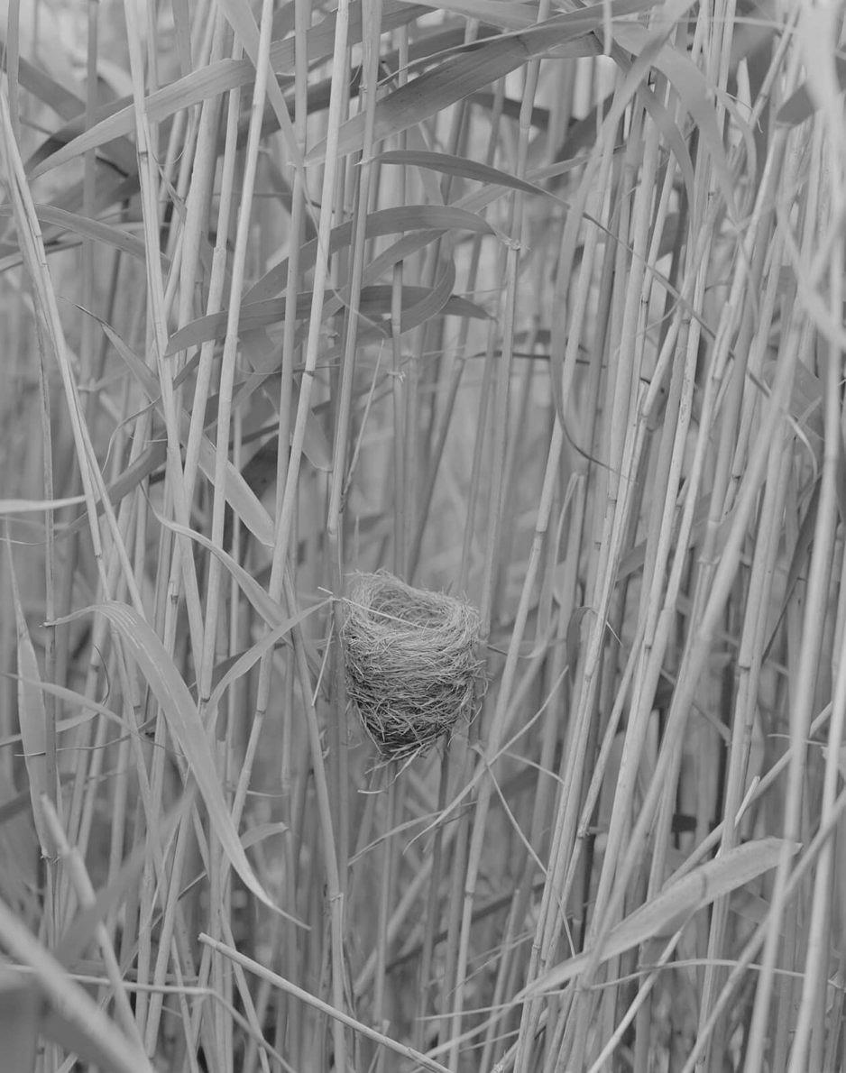 Nests - Sam Laughlin - Phases Magazine