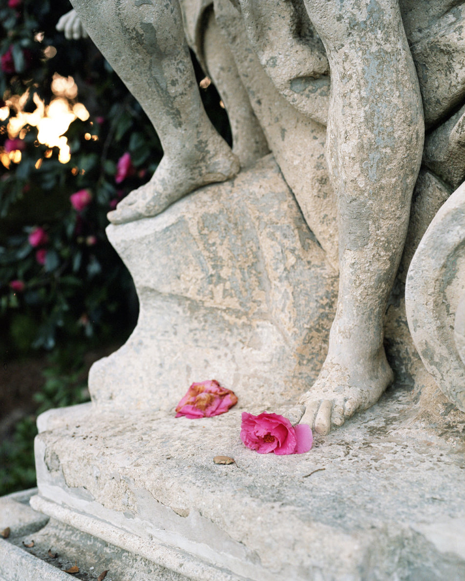 Some LA Flowers - Adam Ianniello - Phases Magazine
